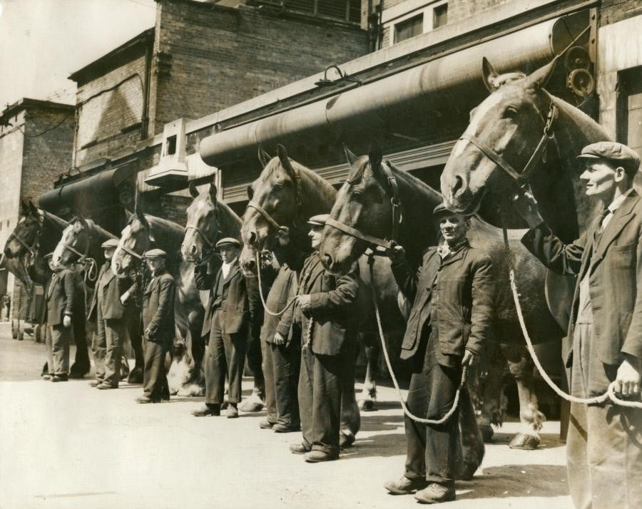 Neckinger Depot,Bermondsey Borough Council horses at time of disposal. May 1953.  X.jpg