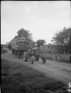 HOP PICKING IN YALDING, KENT, ENGLAND, UK, 1944 2.jpg